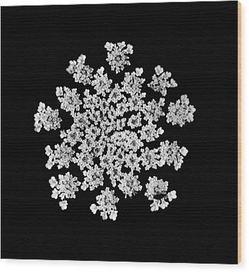 'queen Anne's Snowflake' Wood Print