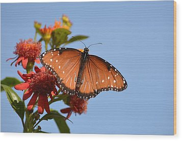 Wood Print featuring the photograph Queen Butterfly by Debra Martz