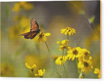 Queen Butterfly On Coreopsis  Wood Print by Mark Weaver