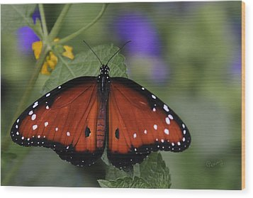 Queen Butterfly Wood Print by Penny Lisowski