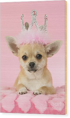 Queen Chihuahua Wood Print by Greg Cuddiford