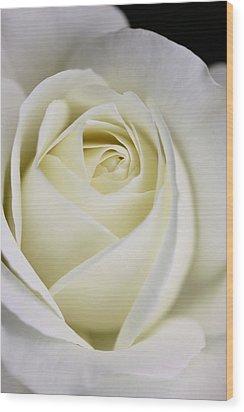 Queen Ivory Rose Flower 2 Wood Print by Jennie Marie Schell