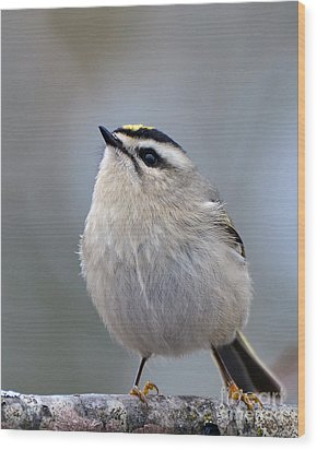 Wood Print featuring the photograph Queen Of The Kinglets by Stephen Flint