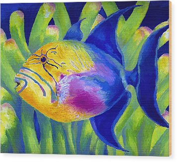 Queen Triggerfish Wood Print by Stephen Anderson