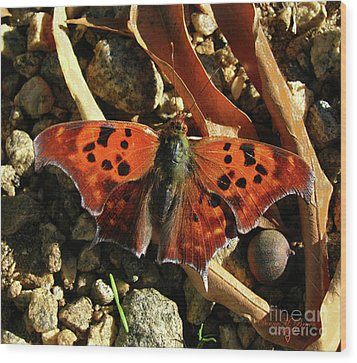 Wood Print featuring the photograph Question Mark Butterfly by Donna Brown