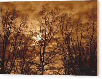 Quiet Wood Print by Heather L Wright