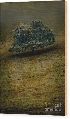 Quiet Lonliness Of The Blue Ridge Wood Print by Dan Carmichael
