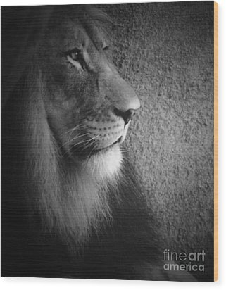 Wood Print featuring the photograph Quiet Majesty by Julie Clements