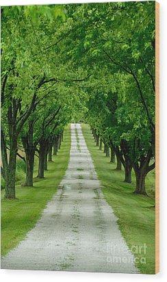 Quiet Path Between Trees Wood Print