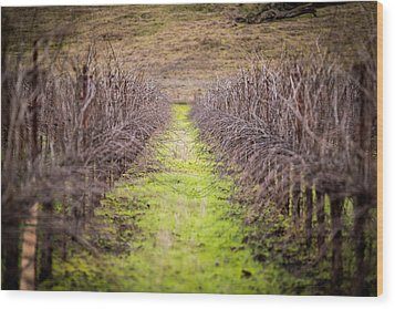 Quiet Vineyard Wood Print by Mike Lee