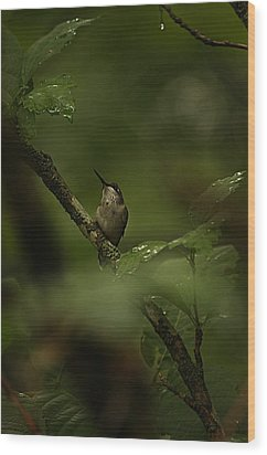 Wood Print featuring the photograph Quietly Waiting by Tammy Schneider