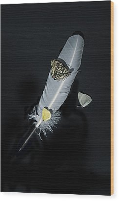 Quill With Butterflies Wood Print by Joana Kruse