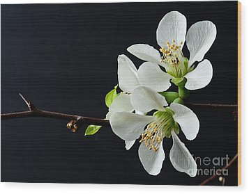 Wood Print featuring the photograph Quince Branch 2012 by Art Barker