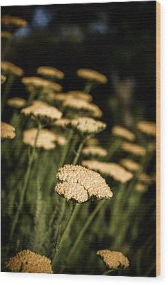 Quivering Yarrow Wood Print by Dave Garner