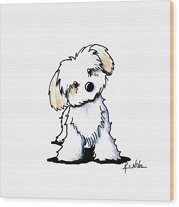 Quizzical Havanese Wood Print by Kim Niles