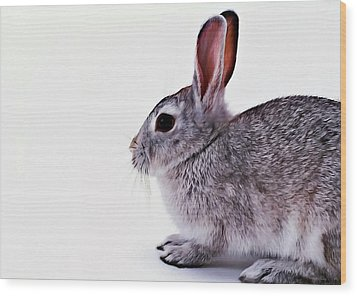Rabbit 1 Wood Print by Lanjee Chee