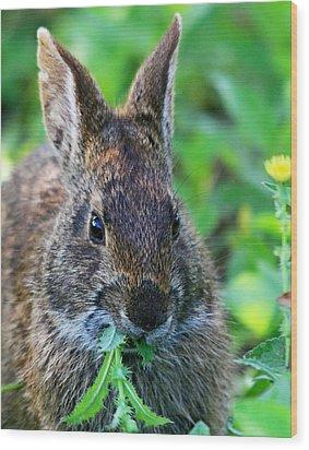 Rabbit Food Wood Print