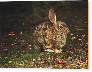 Wood Print featuring the photograph Rabbit  by Marjorie Imbeau