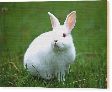Rabbit On Grass Wood Print by Lanjee Chee