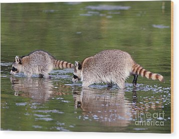 Raccoon Mother And Baby Wood Print by Martha Marks
