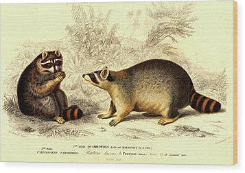 Raccoons Wood Print by Collection Abecasis