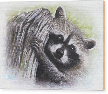 Wood Print featuring the drawing Raccoon  by Patricia Lintner