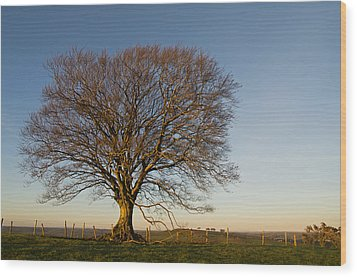 Raddon Hill Top Tree Wood Print by Pete Hemington