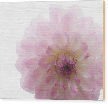 Radiant Bloom Wood Print