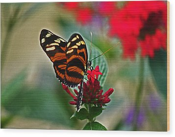Radiant Butterfly Wood Print