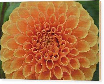 Radiant Wood Print by Felicia Tica