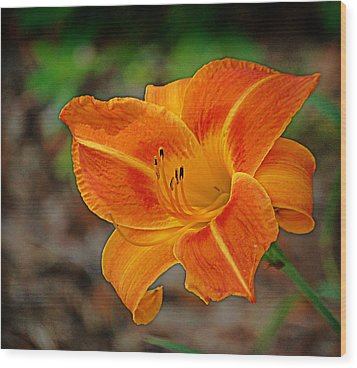 Wood Print featuring the photograph Radiant Orange by Linda Brown