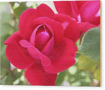 Radiant Red Rosebud Wood Print by French Toast