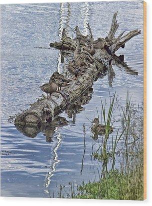 Raft Of Ducks Wood Print by Cathy Anderson