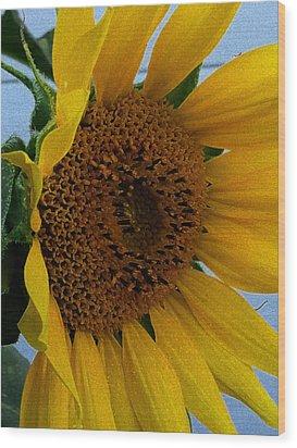 Rahab's Sunflower Wood Print