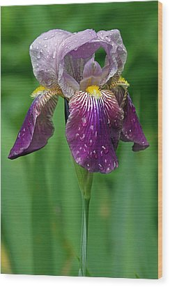 Rain Drenched Iris Wood Print by Juergen Roth