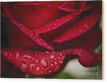 Rain Drops On Rose Petal Wood Print by Oscar Gutierrez