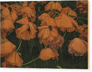 Rain Flowers Wood Print