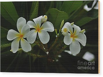 Rain Kissed Plumeria Wood Print