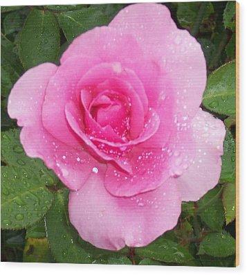Rain Kissed Rose Wood Print by Catherine Gagne