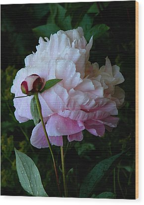 Rain-soaked Peonies Wood Print by Rona Black
