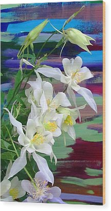 Rainbow Columbine Wood Print by Brenda Pressnall