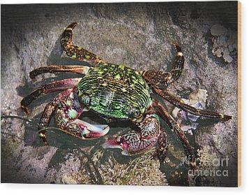 Rainbow Crab Wood Print by Mariola Bitner
