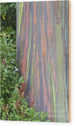 Rainbow Eucalyptus Wood Print by Bryan Keil