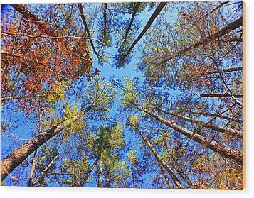 Rainbow Fall Wood Print