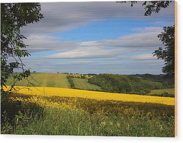 Rainbow Fields Wood Print by Theresa Selley