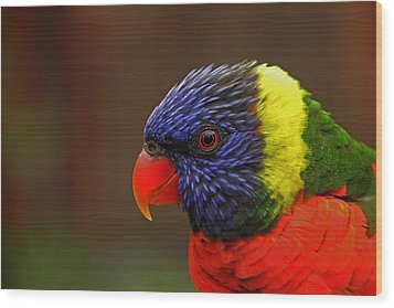 Wood Print featuring the photograph Rainbow Lorikeet by Andy Lawless