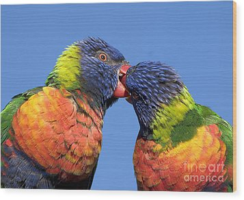 Rainbow Lorikeets Wood Print by Steven Ralser