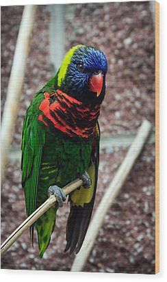 Wood Print featuring the photograph Rainbow Lory Too by Sennie Pierson