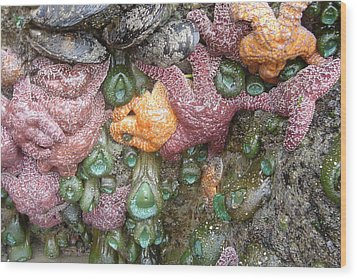 Rainbow Of Sea Creatures Wood Print by Karen Molenaar Terrell