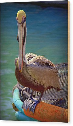 Rainbow Pelican Wood Print by Karen Wiles